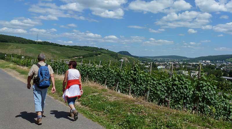 Wandern auf AhrSteig und Rotweinwanderweg im Ahrtal