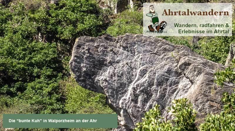 Bunte Kuh Walporzheim an der Ahr im Ahrtal von Ahrtalwandern