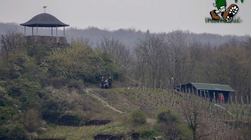 Bunte Kuh bei Walporzheim an der Ahr im Ahrtal