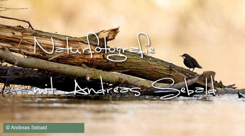 Natur- und Landschaftsfotografie an der Ahr mit Wanderblogger Andreas Sebald